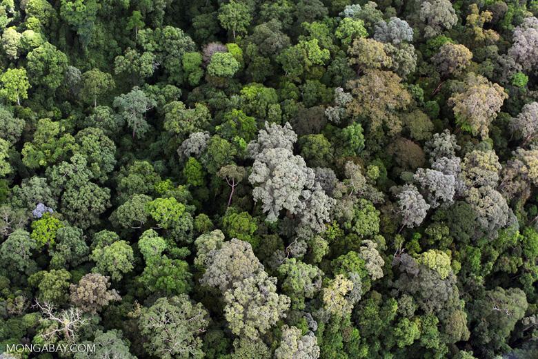Borneo rainforest in Malaysia