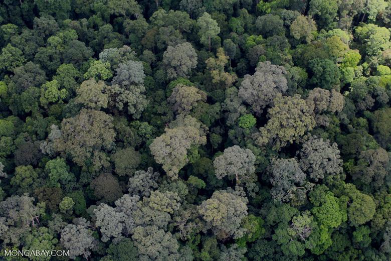 Borneo forest -- sabah_2299