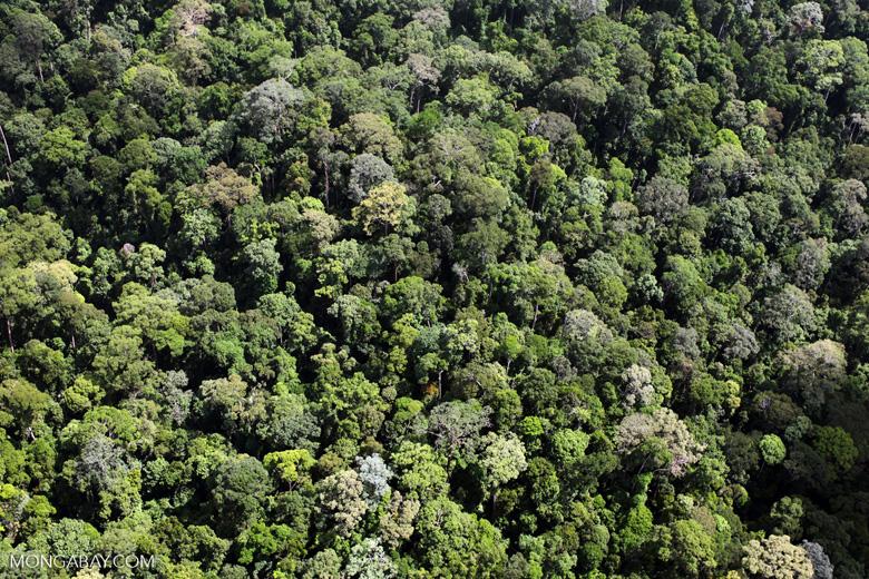 Borneo rainforest -- sabah_2314