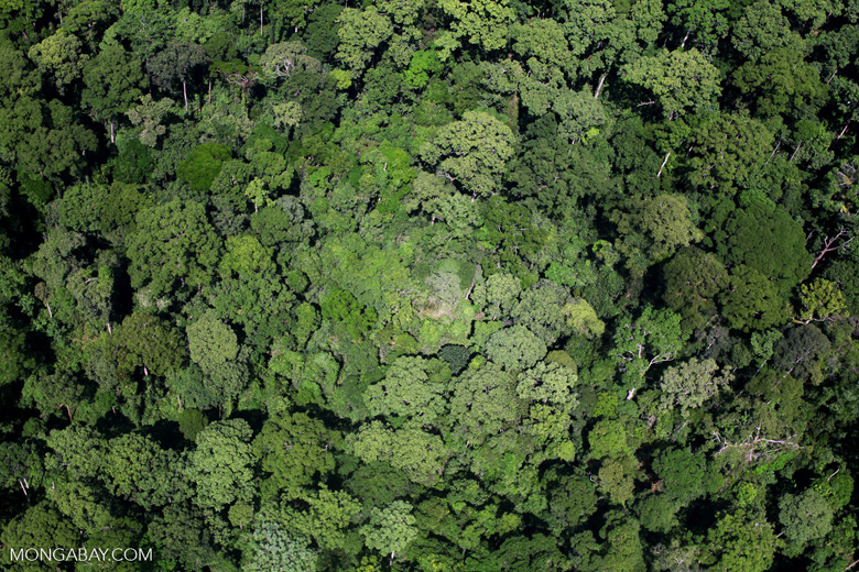 Forest in Borneo -- sabah_2345