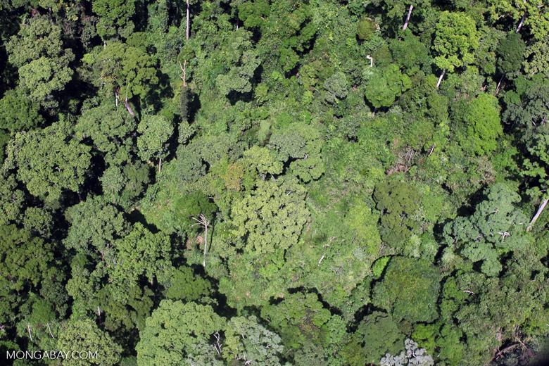 Rain forest in Borneo -- sabah_2358