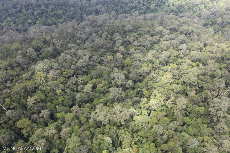 Old-growth lowland rainforest in Borneo