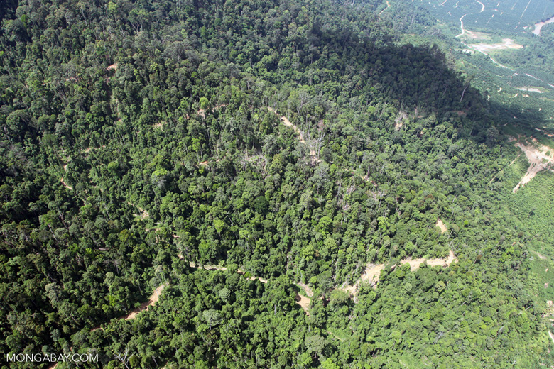 Oil palm estate -- sabah_2392