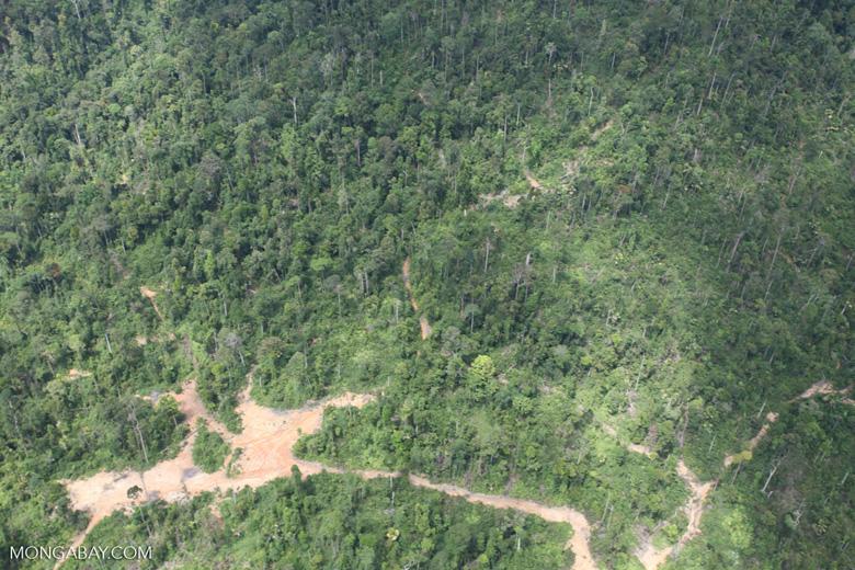 Deforestation in Borneo -- sabah_2410