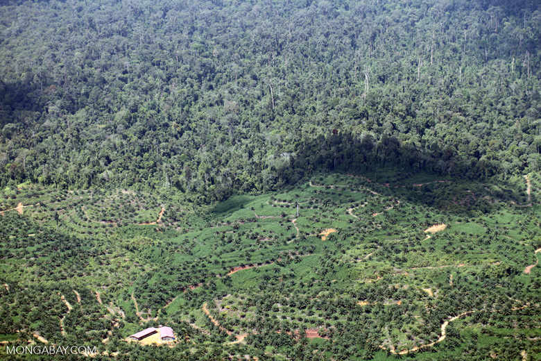 Oil palm plantation -- sabah_2426