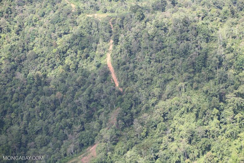 Deforestation in Borneo -- sabah_2446