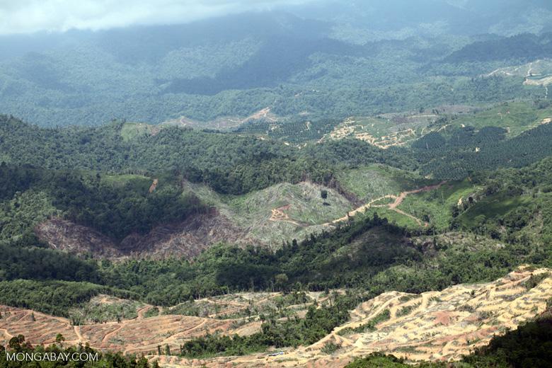 Deforestation in Borneo -- sabah_2452