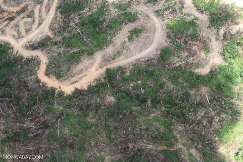 Deforestation in Borneo -- sabah_2481