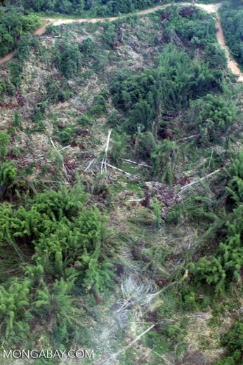 Deforestation in Borneo -- sabah_2482