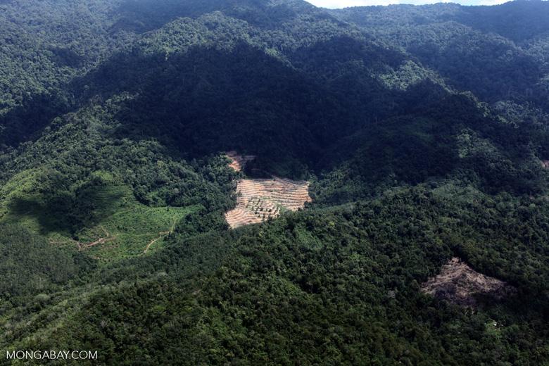 Deforestation in Borneo -- sabah_2491