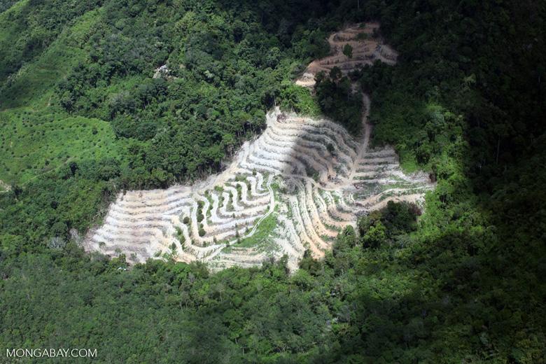 Deforestation in Borneo -- sabah_2501