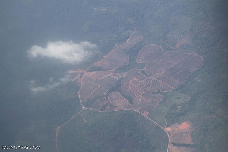 Deforestation in Borneo -- sabah_2511