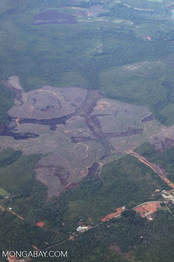 Deforestation in Borneo -- sabah_2513