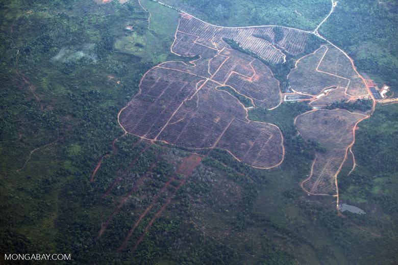 Deforestation in Borneo -- sabah_2532