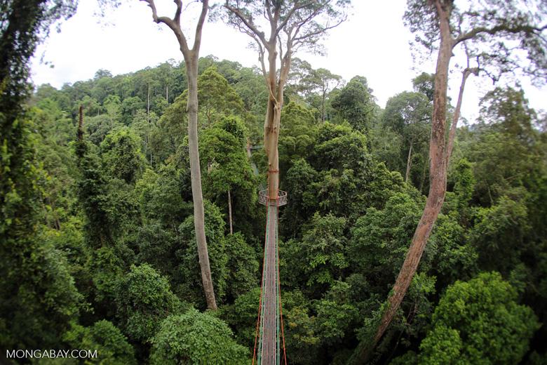 Danum Valley canopy walkway -- sabah_2637
