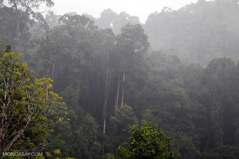 Danum Valley rainforest -- sabah_2655