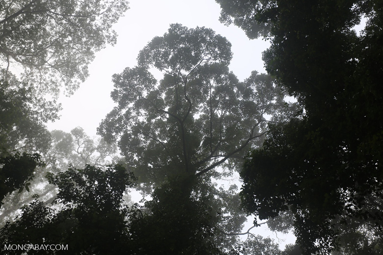 Danum Valley rainforest -- sabah_2752