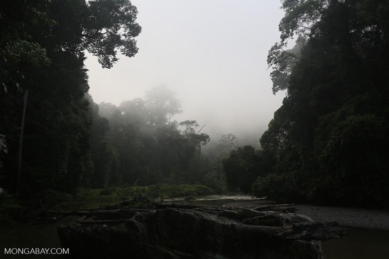 Danum River -- sabah_2755