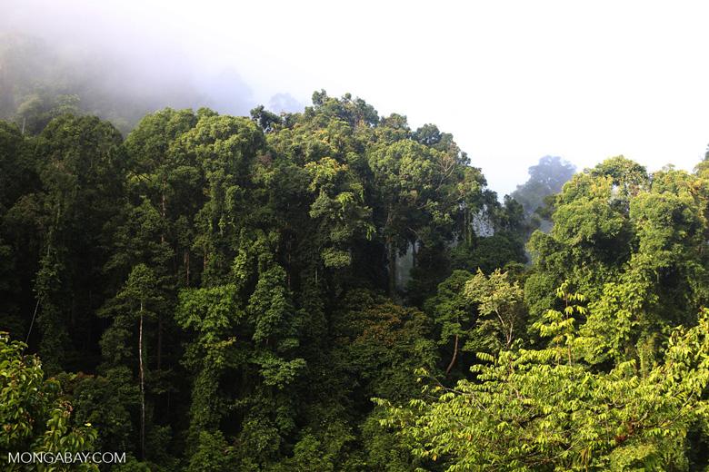 Rainforest in Sabah, Malaysia. Photo by Rhett A. Butler