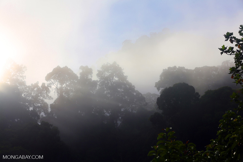 Danum Valley rainforest -- sabah_2777