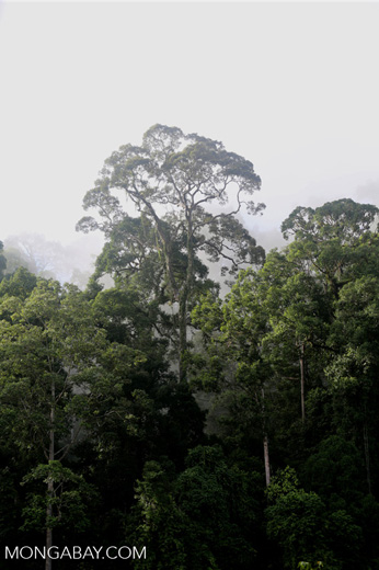 Danum Valley rainforest -- sabah_2781