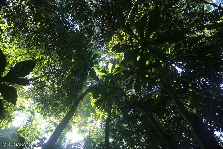 Borneo rainforest -- sabah_2824