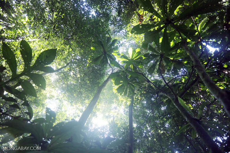 Borneo rainforest -- sabah_2825