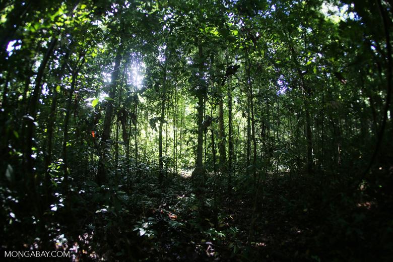 Borneo rainforest -- sabah_2858