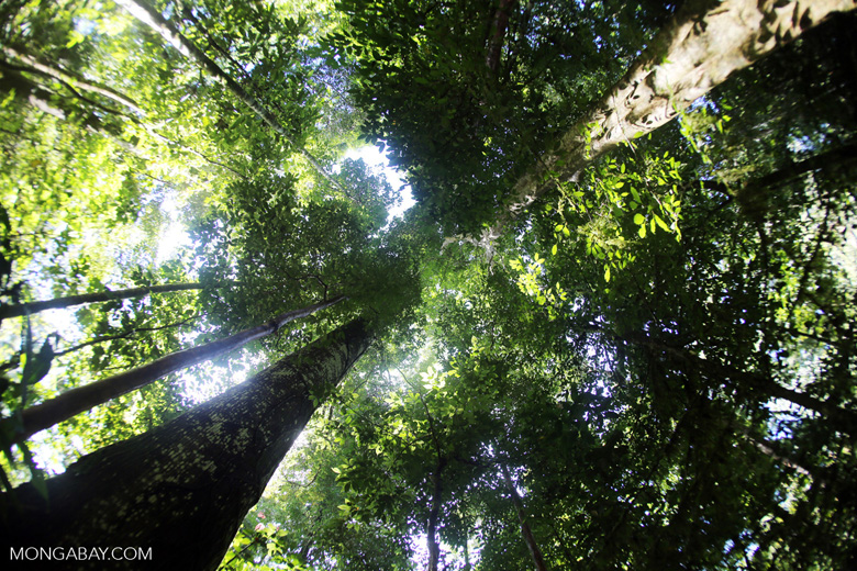Borneo rainforest -- sabah_2887