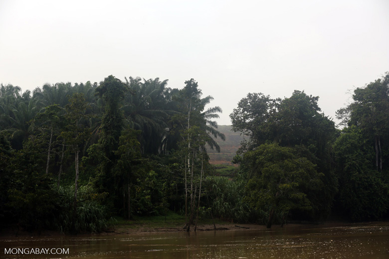 Forest and oil palm along the Kinabatangan River -- sabah_3077