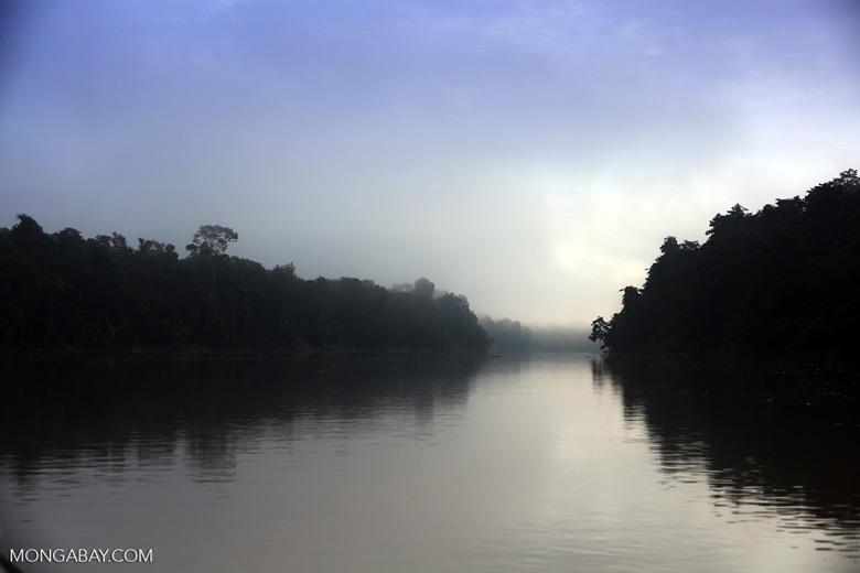 Kinabatangan River -- sabah_3080