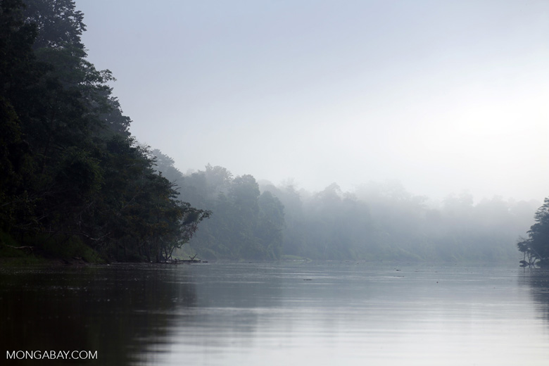 Kinabatangan River -- sabah_3085