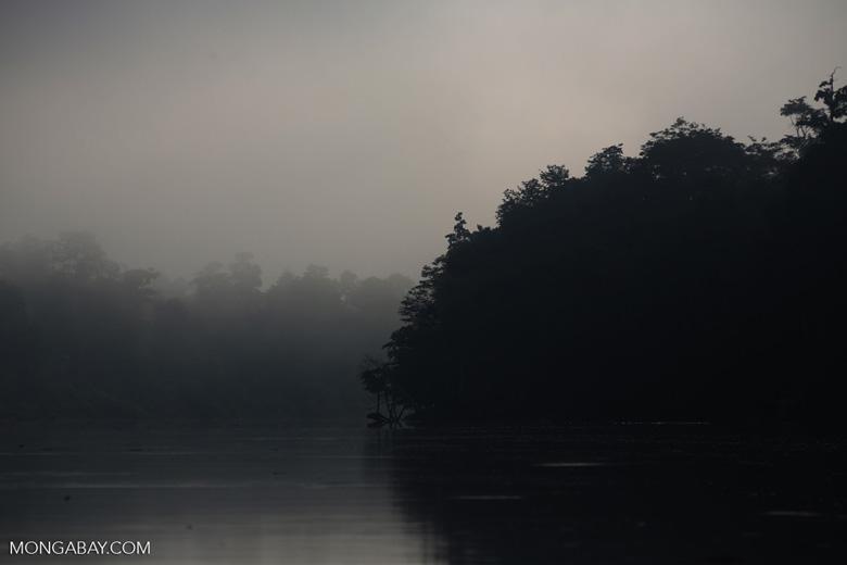 Kinabatangan River -- sabah_3086
