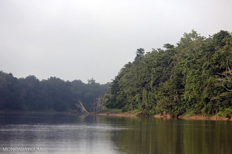 Kinabatangan River -- sabah_3183