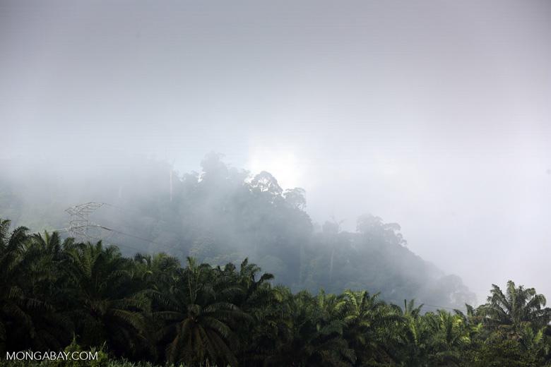 Oil palm plantation and rainforest in Borneo -- sabah_3184