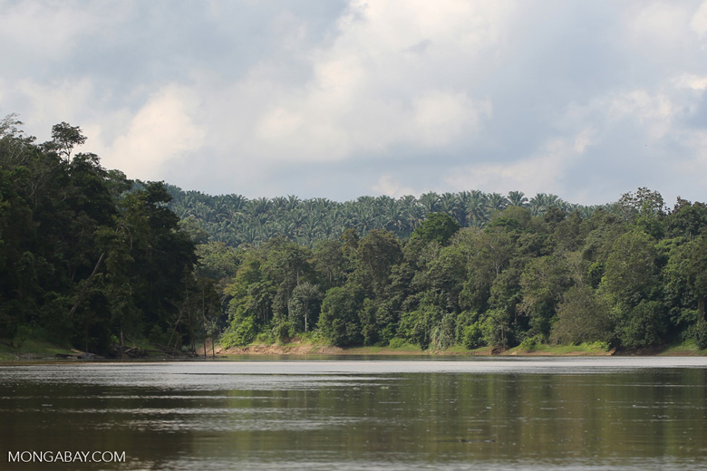 Oil palm plantation and rainforest along the Kinabatangan in Borneo