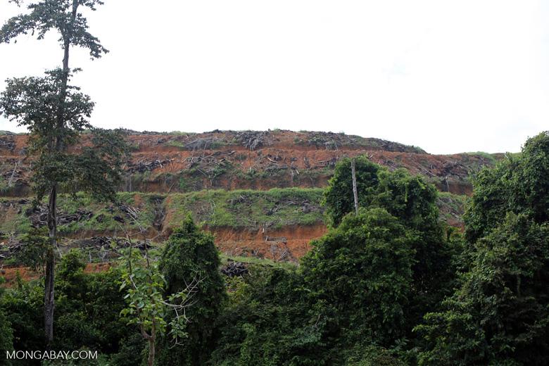 Deforestation for oil palm -- sabah_3279