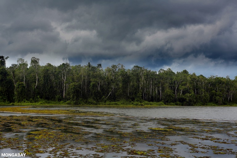 Oxbow lake in Borneo