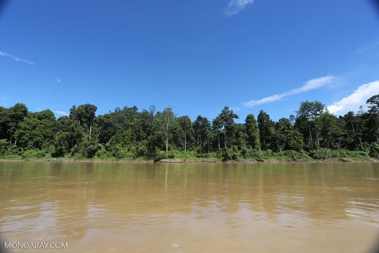 Rainforest along the Kinabatangan river -- sabah_3368