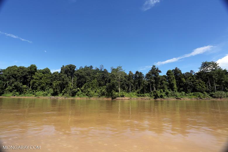 Rainforest along the Kinabatangan river -- sabah_3369