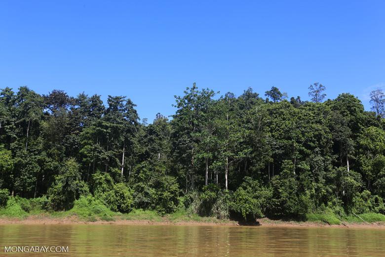 Rainforest along the Kinabatangan river -- sabah_3370