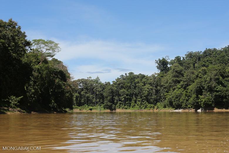 Rainforest along the Kinabatangan river -- sabah_3376