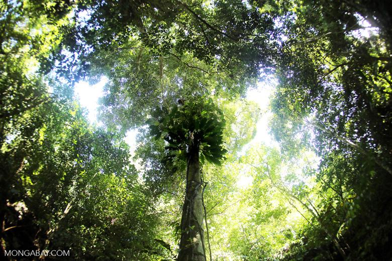 Borneo rainforest -- sabah_3437
