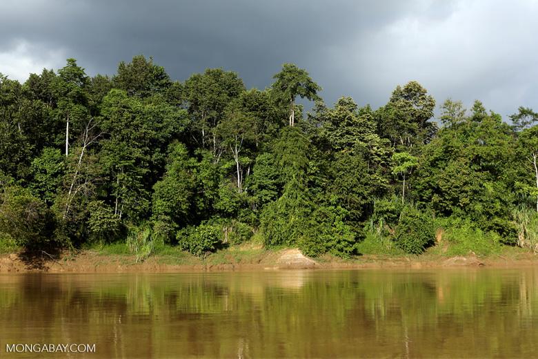 Rainforest along the Kinabatangan river -- sabah_3509
