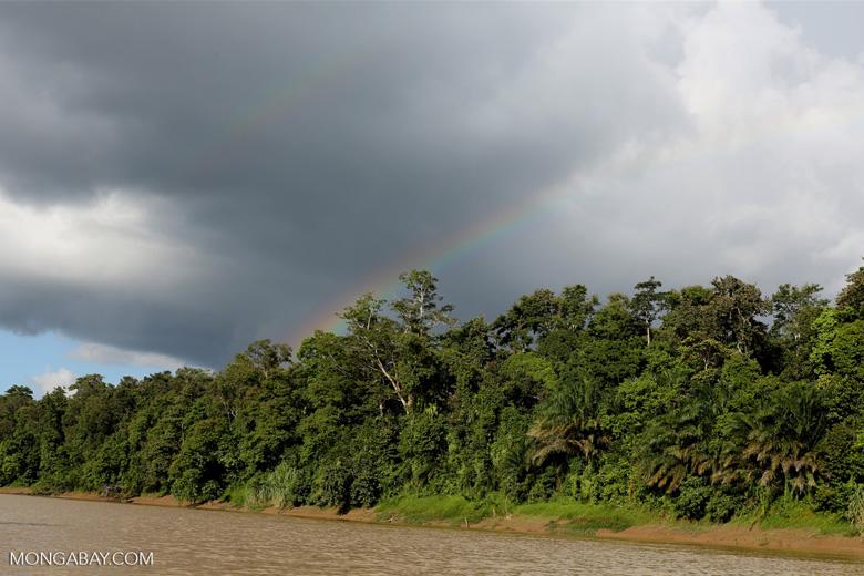 Rainbow over the Borneo rainforest -- sabah_3514