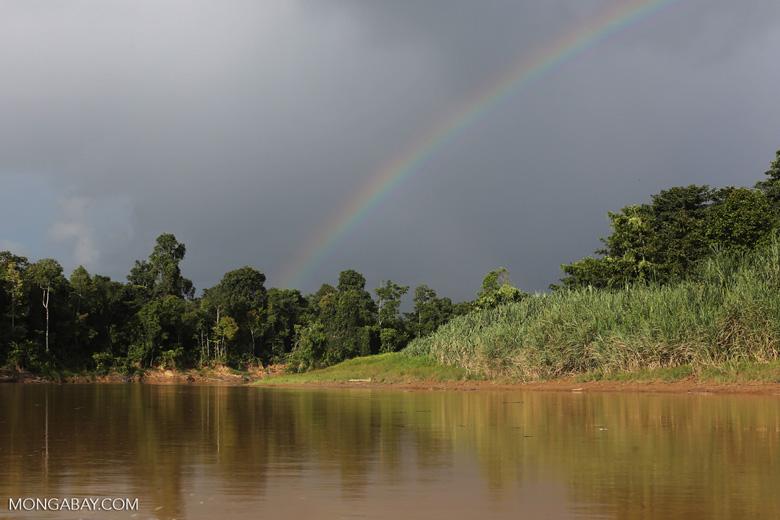 Rainbow over the Borneo rainforest -- sabah_3522
