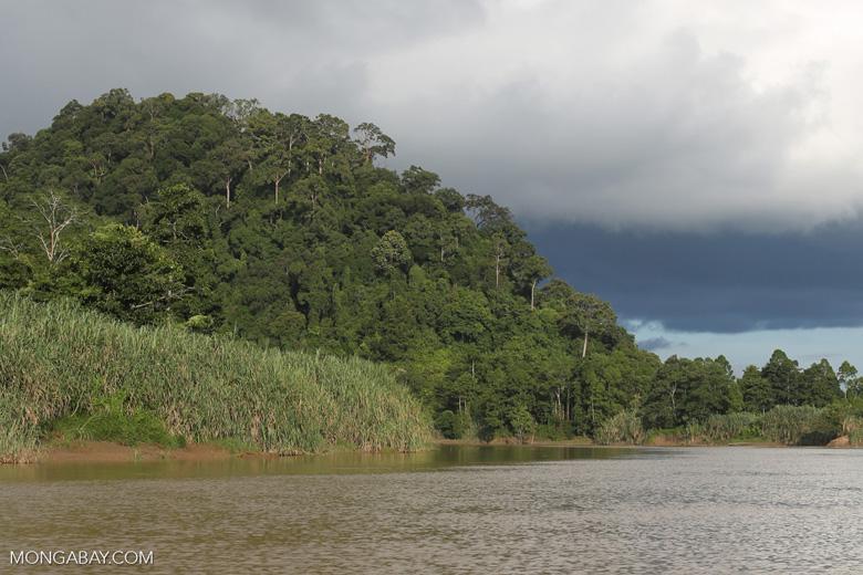 Rainforest above the Kinabatangan river -- sabah_3535