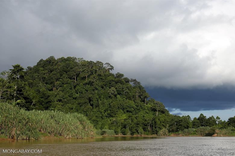 Rainforest above the Kinabatangan river -- sabah_3537