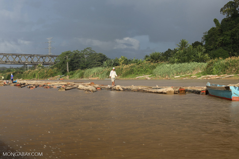 Timber being floated down the Kinabatangan river -- sabah_3547