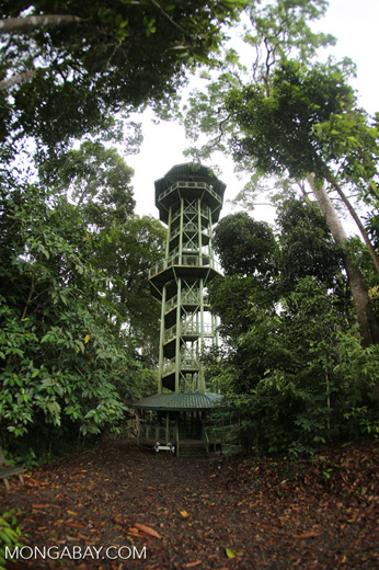 Tower at the Rainforest Discovery Center